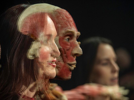 BODY WORLDS London (Family Pass)-