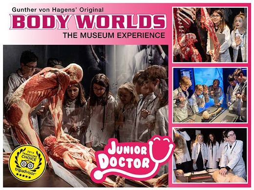 Body Worlds' Junior Doctor
